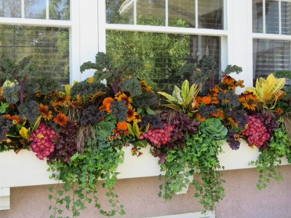 Window Boxes Bring a Fall Garden to Life - Home Wizards